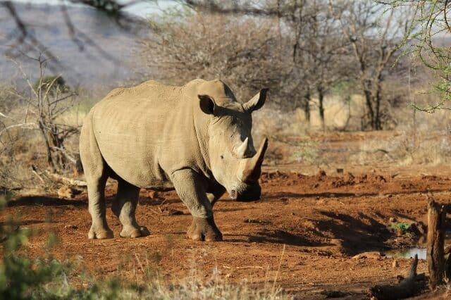 rhino,safari,game drive,big5,family,family break, animals,wildlife,selfcatering
